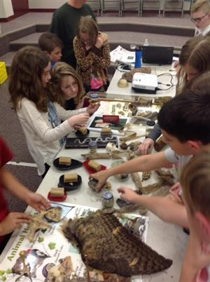 Students look and feel various animal artifacts.